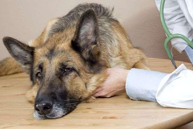 Диагностика домашних животных