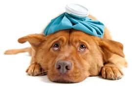 Лечение собак и кошек (рисунок)