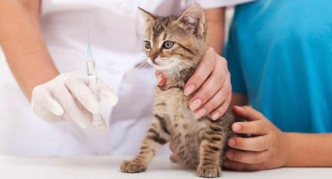 sakarya-adapazari-merkez-veteriner-klinigi-3