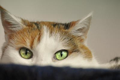 Стерилизация кошки в Ростове-на-Дону